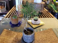 ミニ盆栽『黒松』花器付き♪