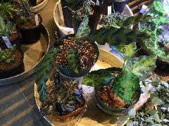 熱帯植物各種