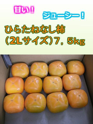 ひらたねなし柿(2Lサイズ32個入り)7,5kg