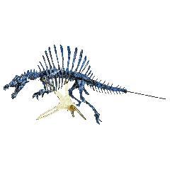 <越前和紙>NEWスピノサウルス<藍>