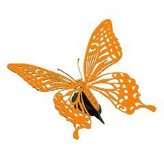チョウ【オレンジ】