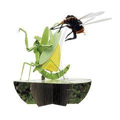 カマキリvsスズメバチ