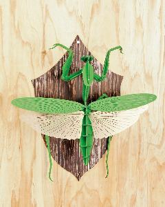 <昆虫標本>カマキリ(グリーン) 壁掛けタイプ