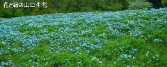 ブルーのカーペット