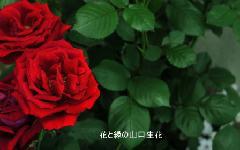 片隅のバラ