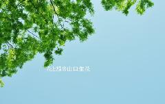 新緑と春の青空