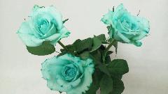 一輪花束(バラ)      「ライムグリーン」