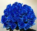 40本のバラの花束「ブルー」