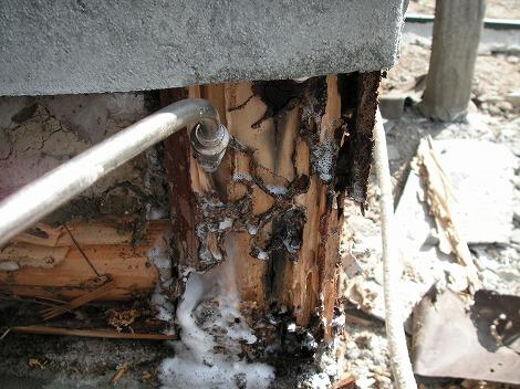 シロアリ柱被害 薬注入 シロアリ画像 ▼詳細ヤマトシロアリの被害をうけ... シロアリ柱被害 薬