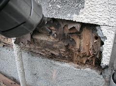 シロアリ防除施工風景(材木ドリルカット)
