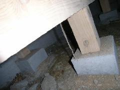 ☆世にも珍しいマンション床下のシロアリ空中蟻道