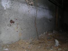 鉄骨造りのヤマトシロアリ退治 蟻道有り