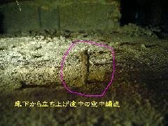 ヤマトシロアリ 珍しい空中蟻道 堺市