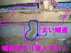 シロアリの天井材木被害 水漏れとシロアリ