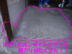 アメリカカンザイシロアリ羽アリ 糞 画像 駆除施工