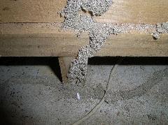 イエシロアリのマンショントイレ被害