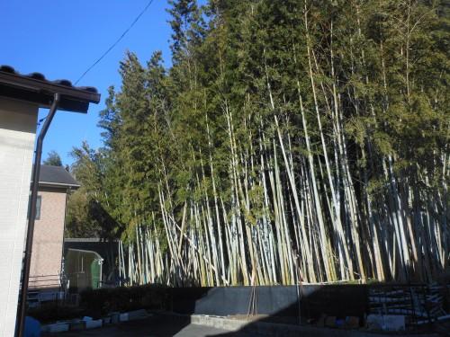 一宮市竹林伐採工事