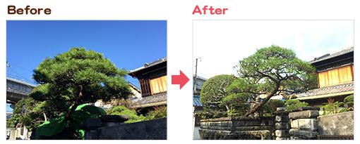樹木剪定・樹木伐採