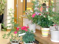 花壇造り・庭造り