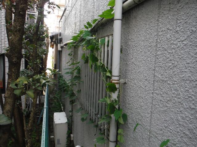 中野区 アパート 建物周り 除草及び苔除去作業