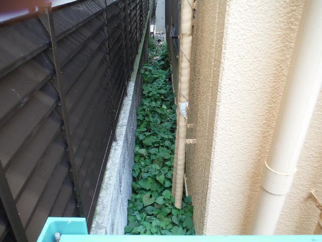 渋谷区 テナントビル 建物外周 除草