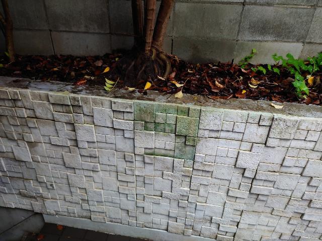 都内テナントビル  エントランス植込み壁面 苔除去