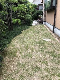 芝生の張替え。その他植栽