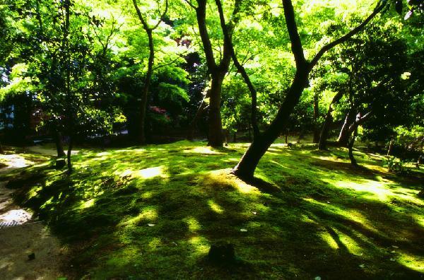 京都の新緑。