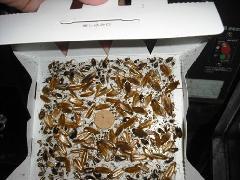 東京 レストラン厨房チャバネゴキブリ駆除