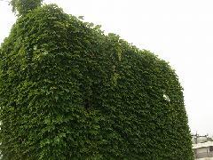 豊島区 オフィスビル 外壁除草作業