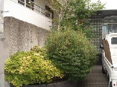 豊島区 オフィスビル 植栽せん定作業
