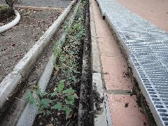 日野市体育施設の側溝清掃