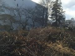 東京都立川市 木々片伐採作業