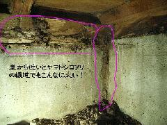 シロアリ対策方法 画像付き 堺市