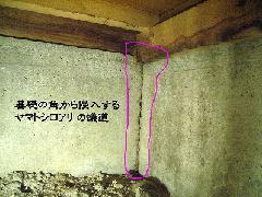 ヤマトシロアリ 被害写真 蟻土
