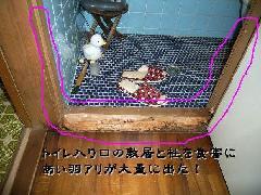 トイレ敷居のシロアリ駆除 写真