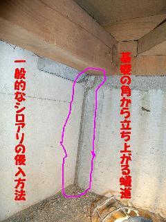 シロアリの侵入方法 シロアリ写真館