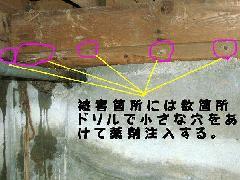 ヤマトシロアリ駆除施工写真