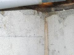 玄関、トイレからシロアリの羽アリ群飛 羽曳野市