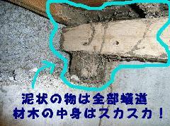 マンションのシロアリ防除 柱ボロボロ 大阪市