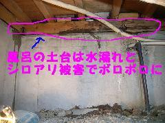 風呂場にシロアリ 家を守る防除士 堺市美原