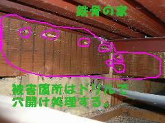 鉄骨の家 風呂場天井シロアリ被害写真