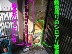 鉄骨住宅のシロアリ被害写真 羽白蟻