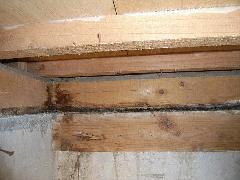 シロアリ予防工事 木材腐朽あり 定期点検実施