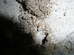 鉄筋コンクリートマンションのイエシロアリ被害